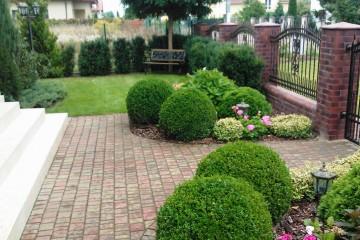 Rośliny Jednoroczne: Kwiaty / Byliny / Nasiona / Pnącza